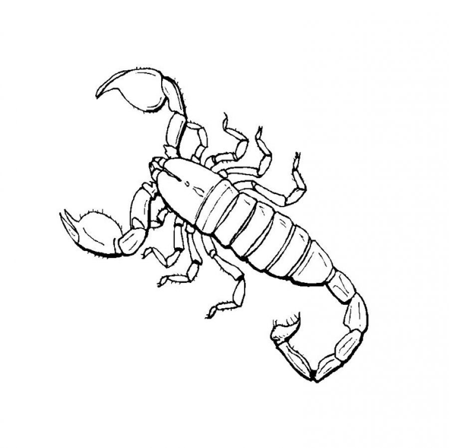 Anime Scorpion Coloring Pages - Coloring Pages For All Ages ...