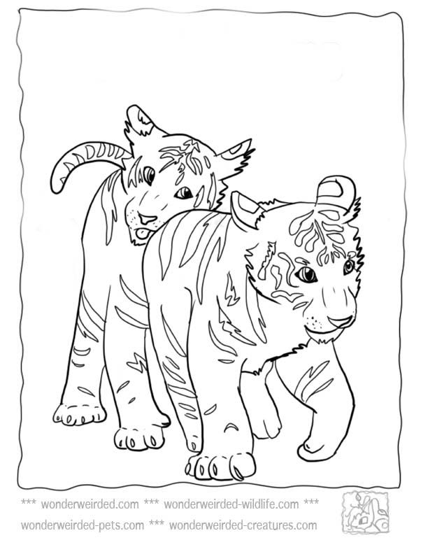 Wildlife Coloring Pages Coloring Home