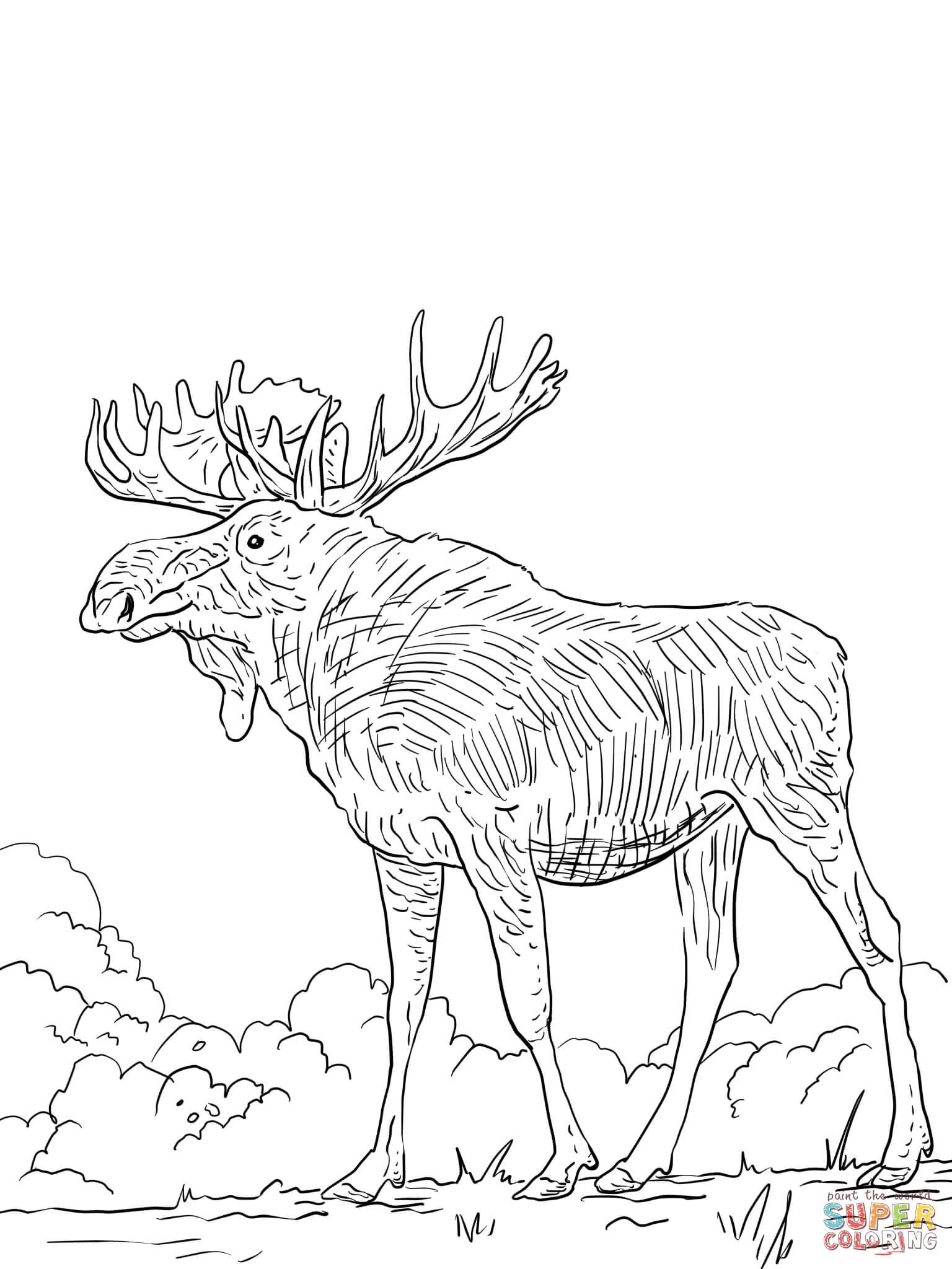 Free Printable Elk Coloring Pages