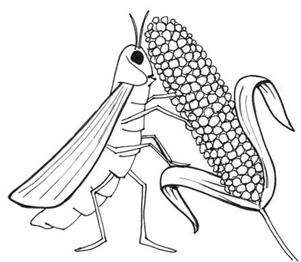 locust eat all livestock in 10 plagues of egypt coloring page