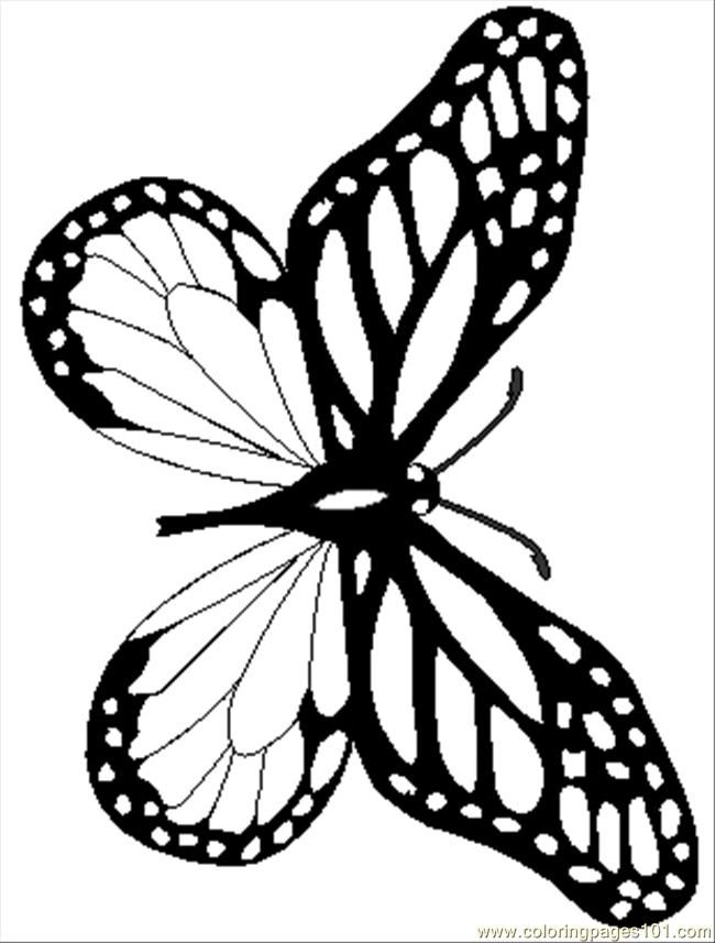 7 pics of realistic butterfly coloring page monarch for Butterfly coloring pages pdf