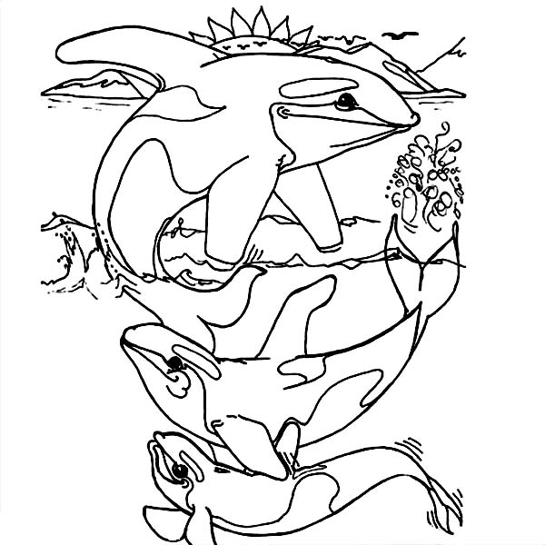 Orca Whale Coloring Pages Coloring