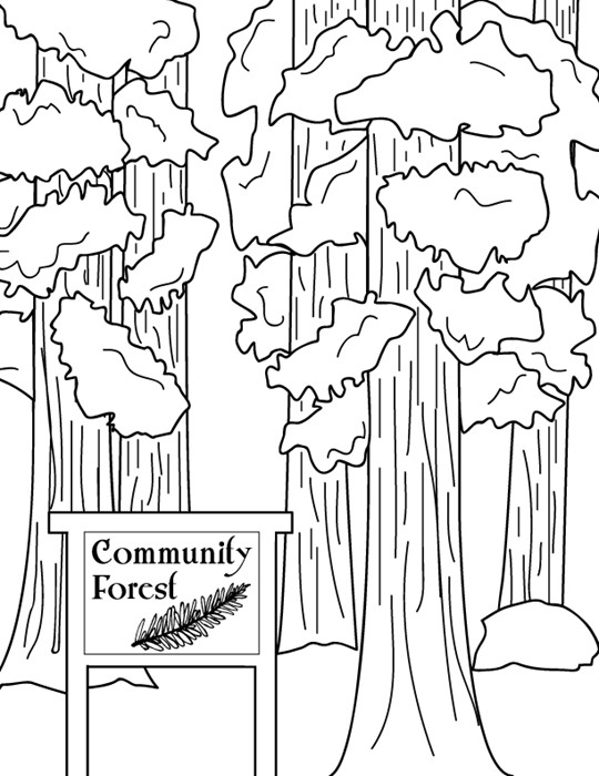 california redwood coloring pages - photo#7