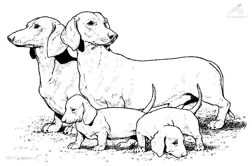 Realistic Dog Coloring Page Coloring Home
