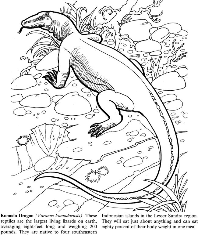 Komodo Dragon Coloring Page Coloring Home