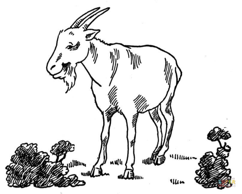 Billy Goat Coloring Page