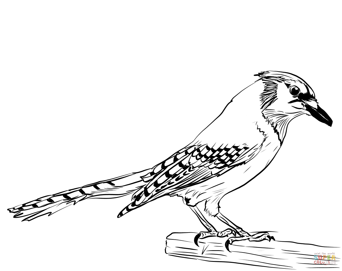 Blue Jay Coloring Page | Free Printable Coloring Pages ...
