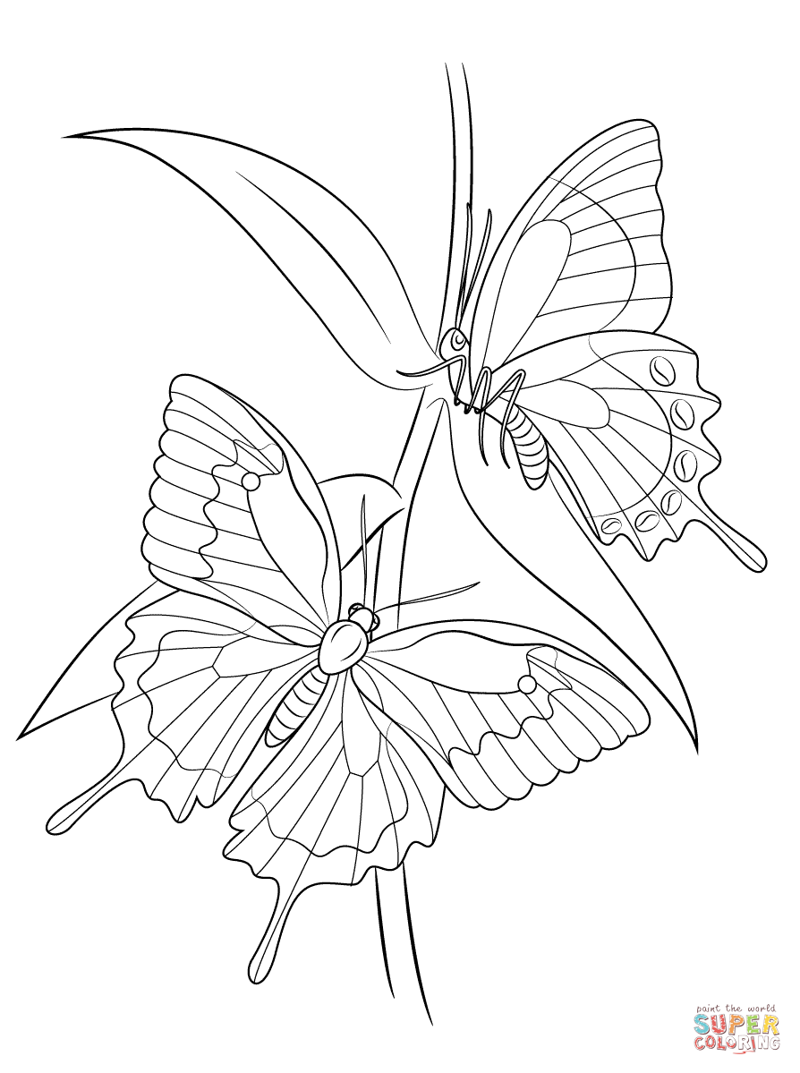 Butterfly Coloring Pages | Free Coloring Pages - Coloring Home