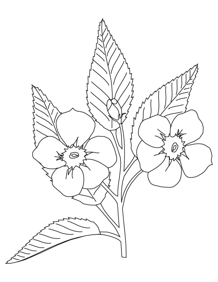 blossoms coloring pages - photo#15
