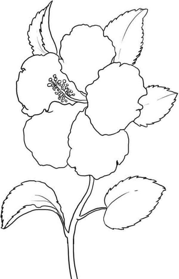 south atlantic states coloring pages - photo#8