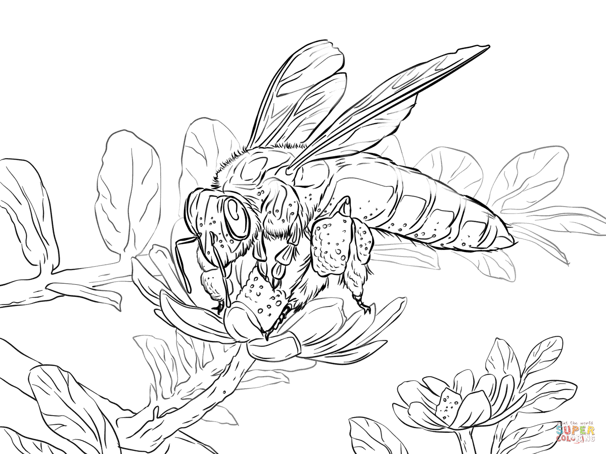 Coloring Pages Of Honey Bees Coloring Home