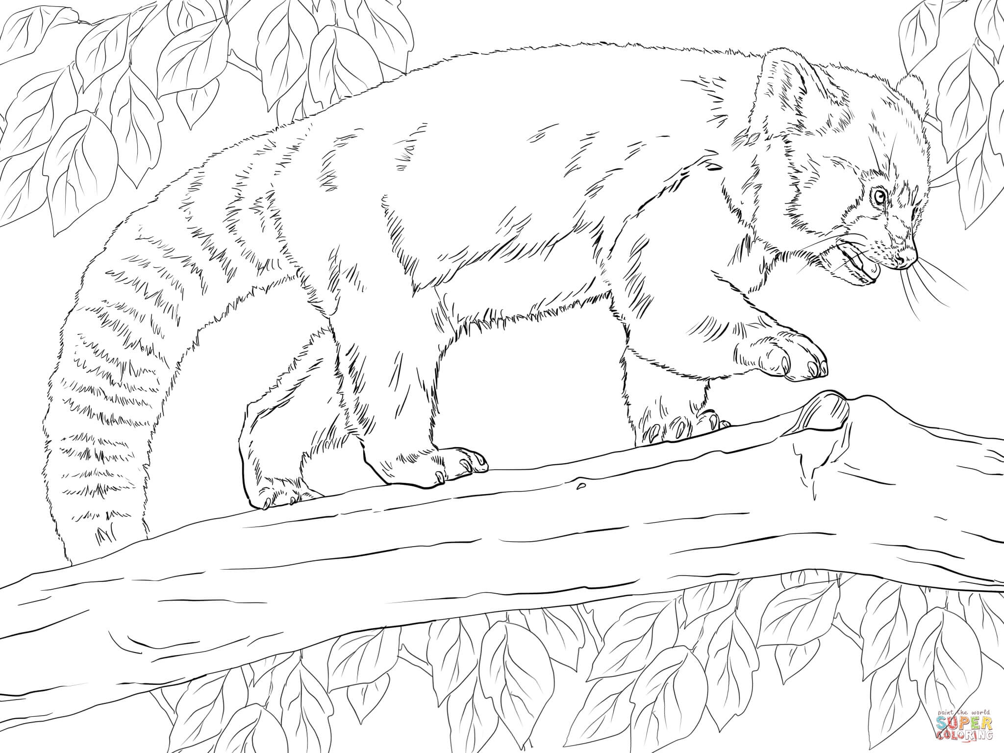 Realistic Red Panda coloring page | Free Printable Coloring Pages