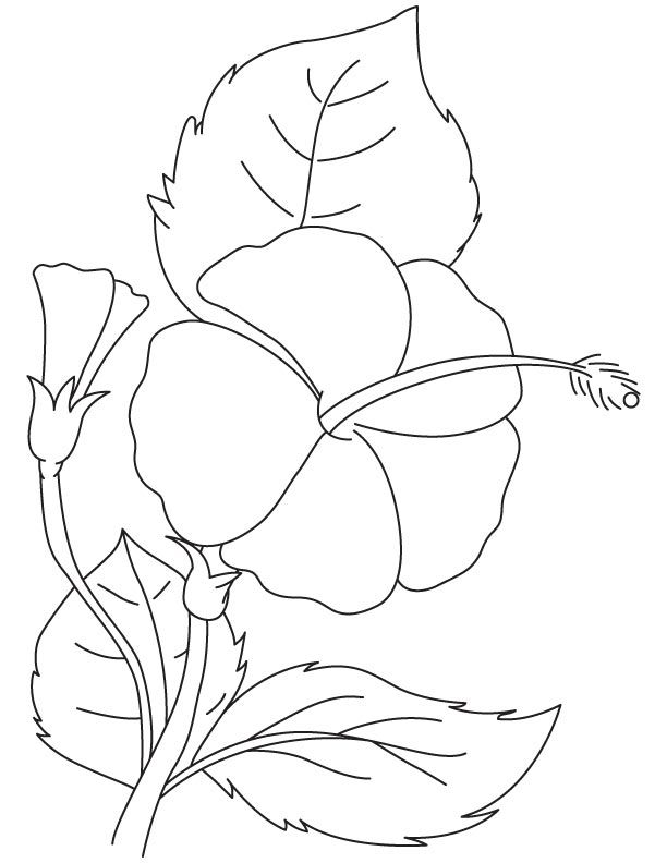Hibiscus brilliant coloring page | Download Free Hibiscus ...