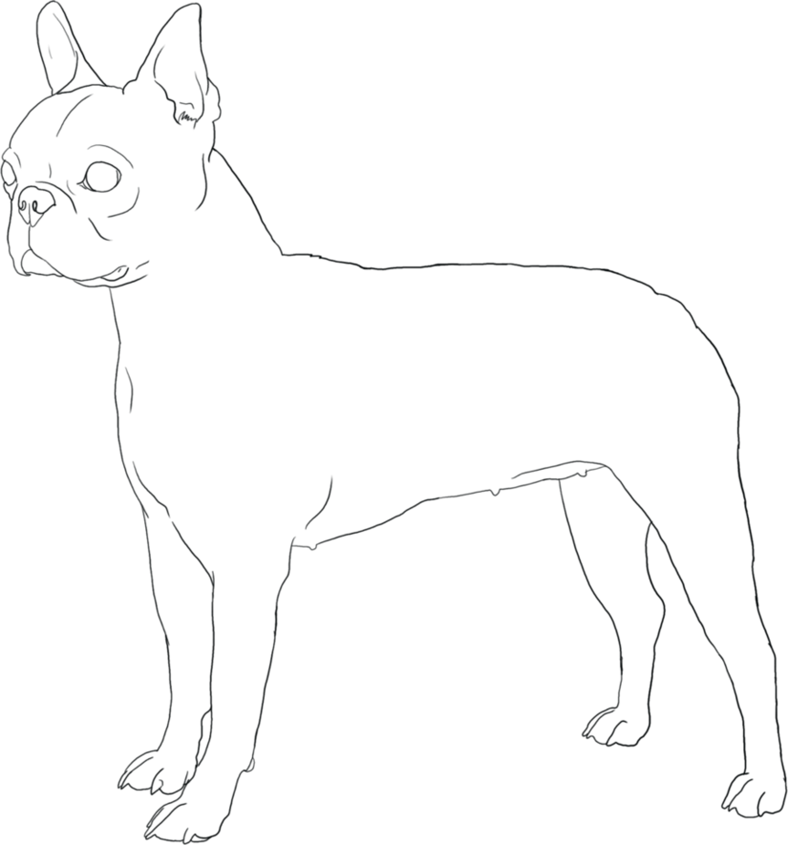 Boston Terrier Coloring Pages | Free Printable Coloring Pages