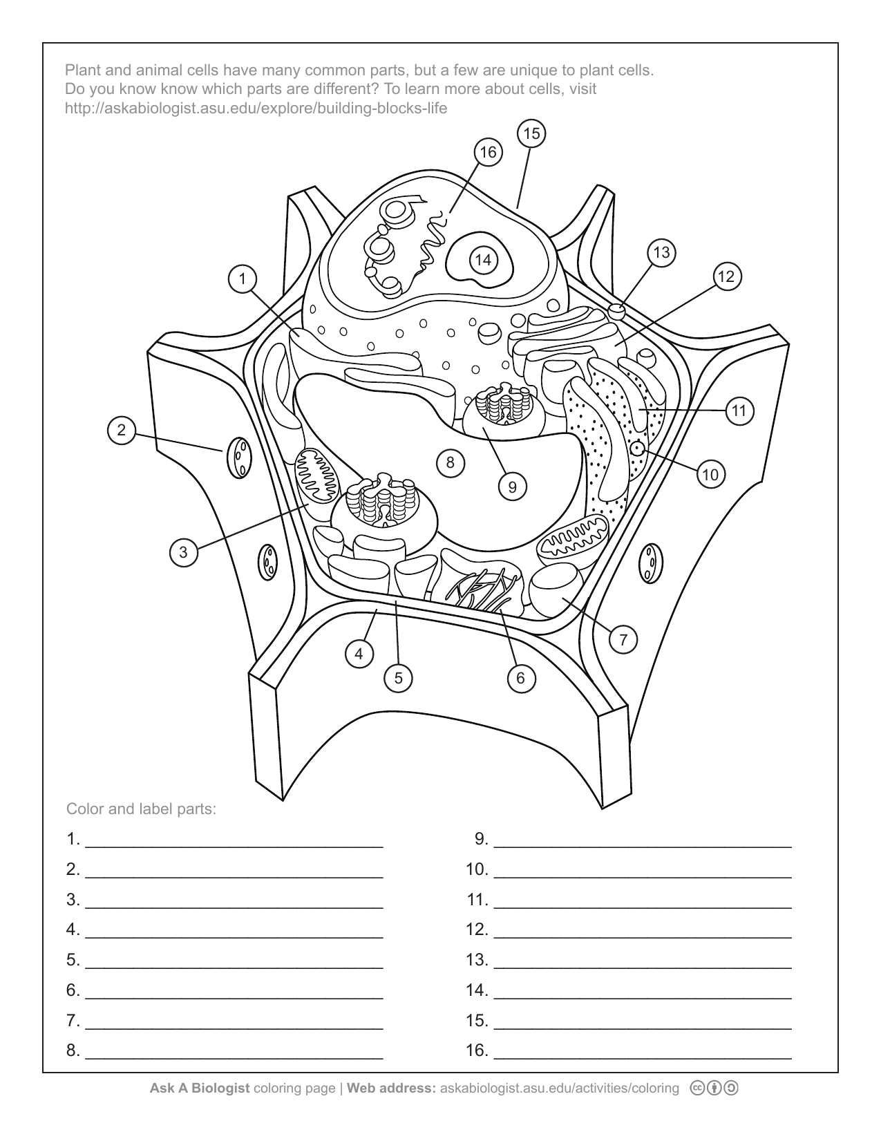 Animal And Plant Cell Coloring Pages Coloring Home