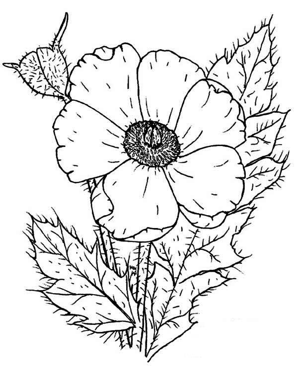 Remembrance day poppy coloring page coloring home for Poppy coloring page