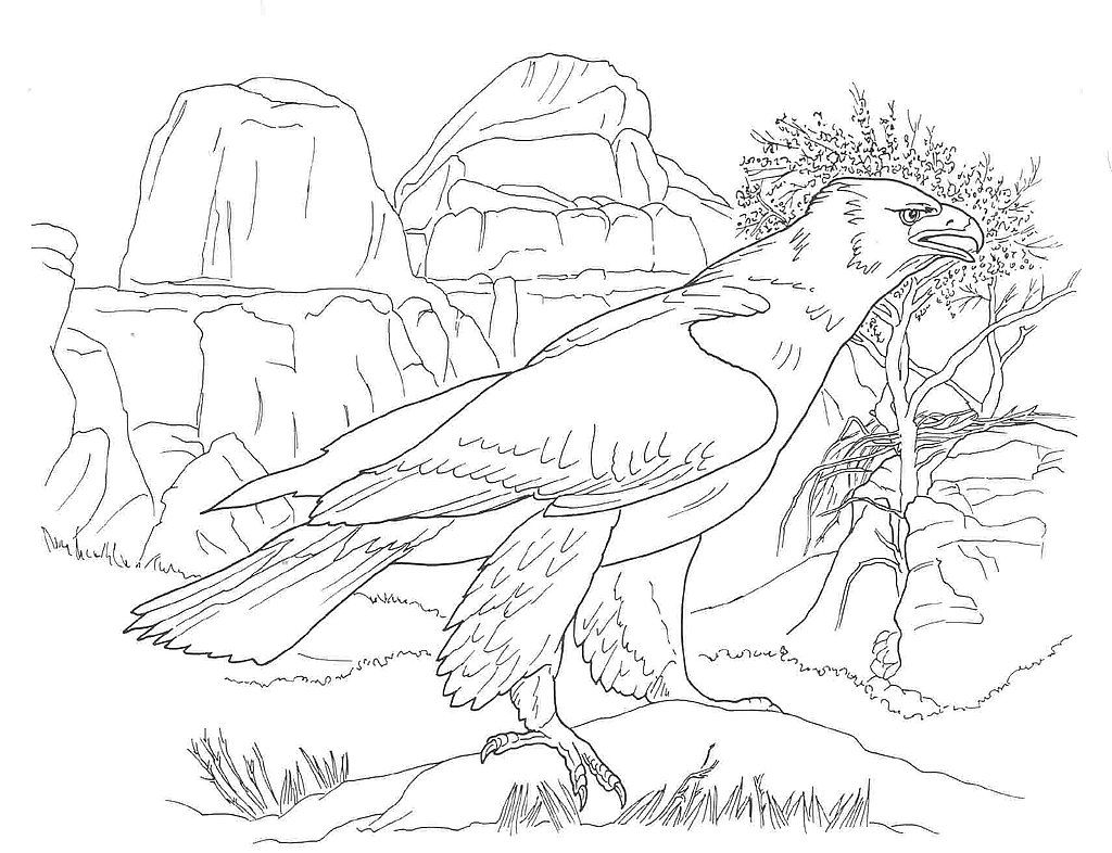 Coloring Pages Of Desert Animals Coloring Pages