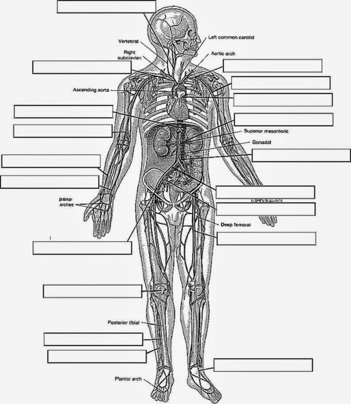 - Anatomy And Physiology Coloring Workbook - Coloring Home