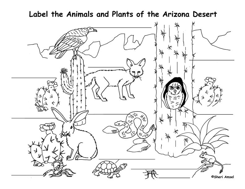 Coloring Pages Plants And Animals : Arizona desert animals and plants coloring page az