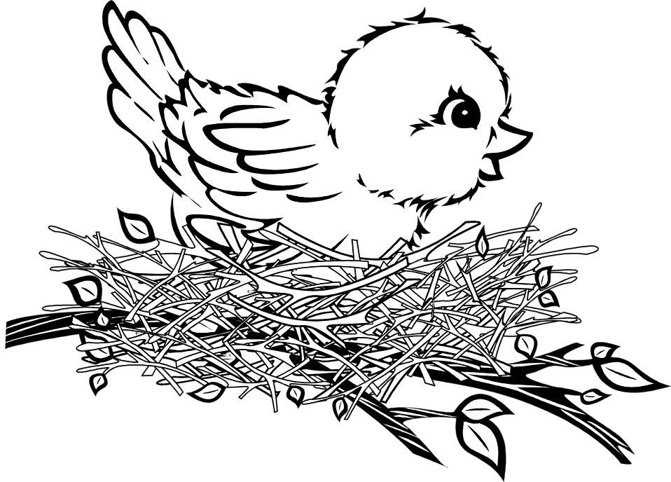 Cartoon Birds Nest Spring Coloring Page