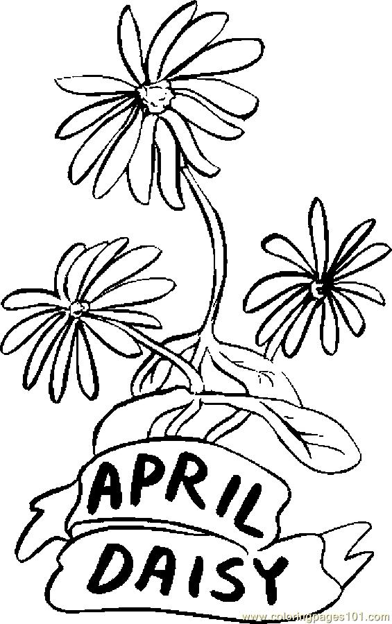 Daisies Coloring Pages - Coloring Home