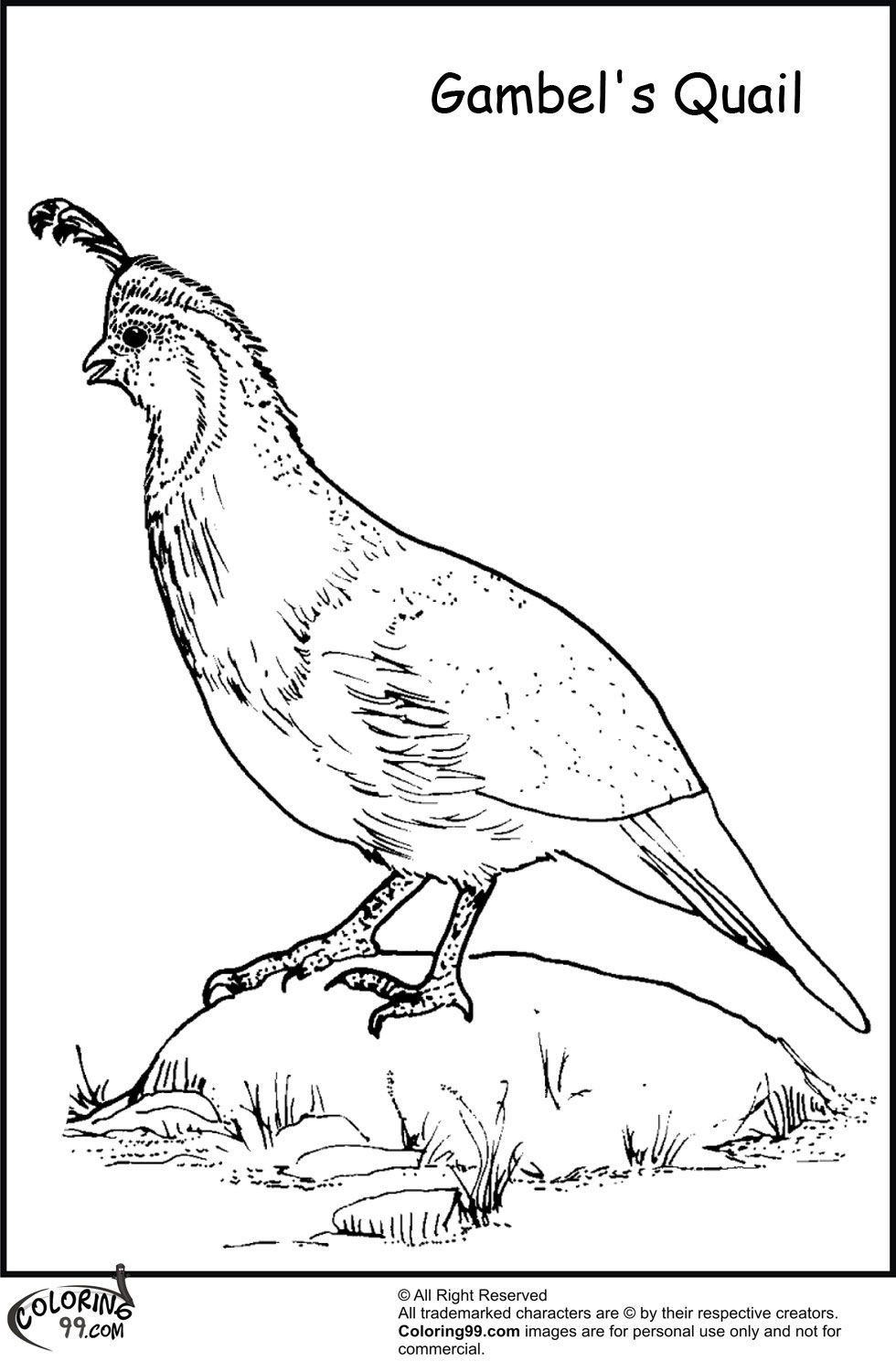 Quail coloring pages team colors