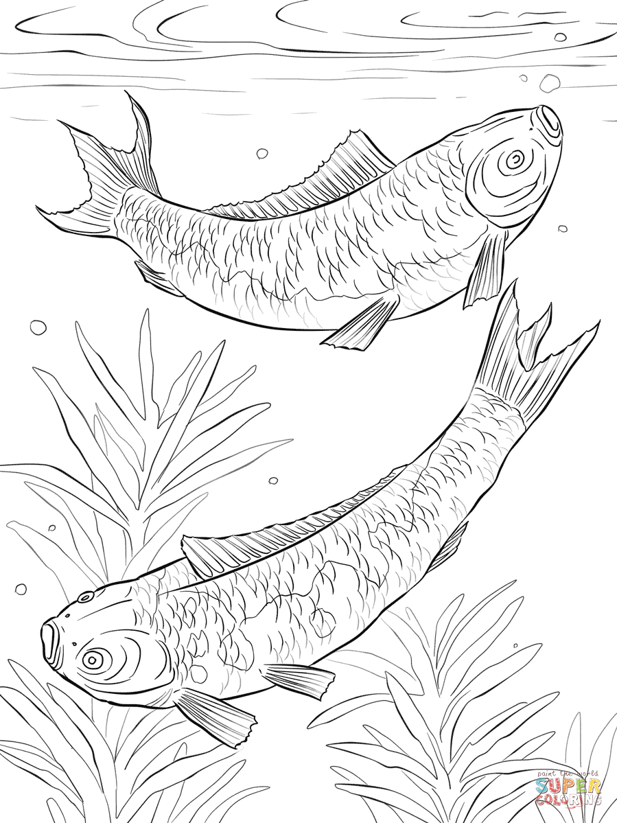 Koi Fishes coloring page | Free Printable Coloring Pages