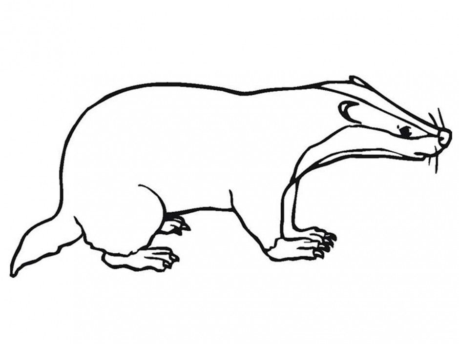 HD wallpapers badger coloring pages