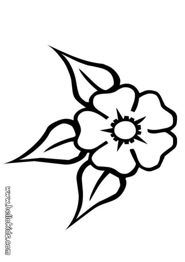 Coloring Page Carnation Flower