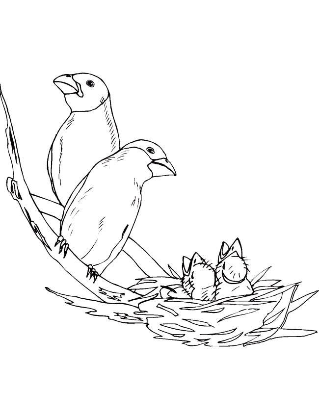 Cartoon Birds Nest Coloring Home