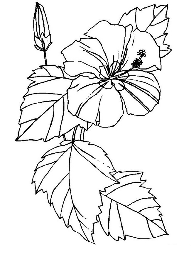 kids hawaii flowers coloring pages - photo#12
