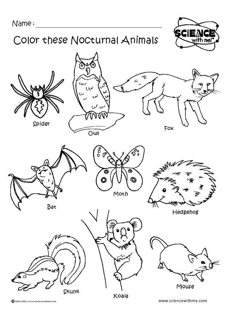 Nocturnal Animals Coloring Pages