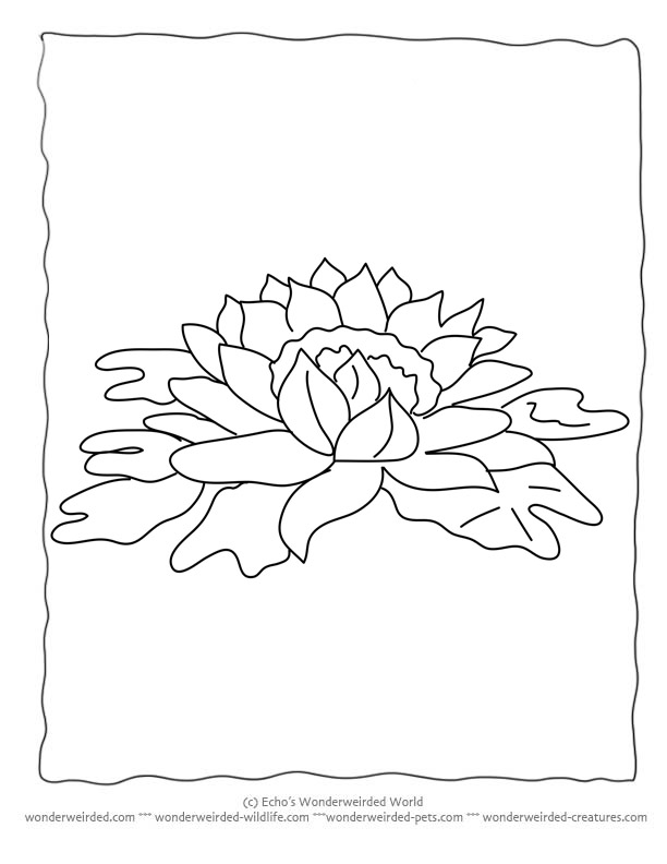 Flower Coloring Sheets Lily,Free Printable Flower Coloring Pages