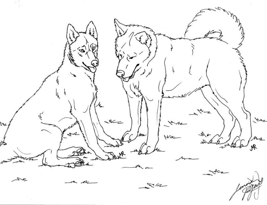 31 Printable Coloring Pages for Kids for: Husky Coloring Page ...