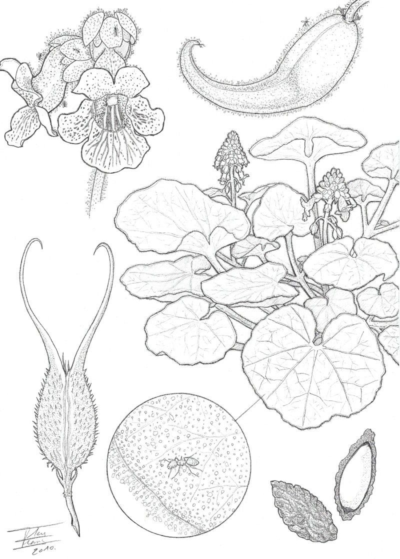 Botanical Art Coloring Book : Botany Coloring Pages Coloring Home