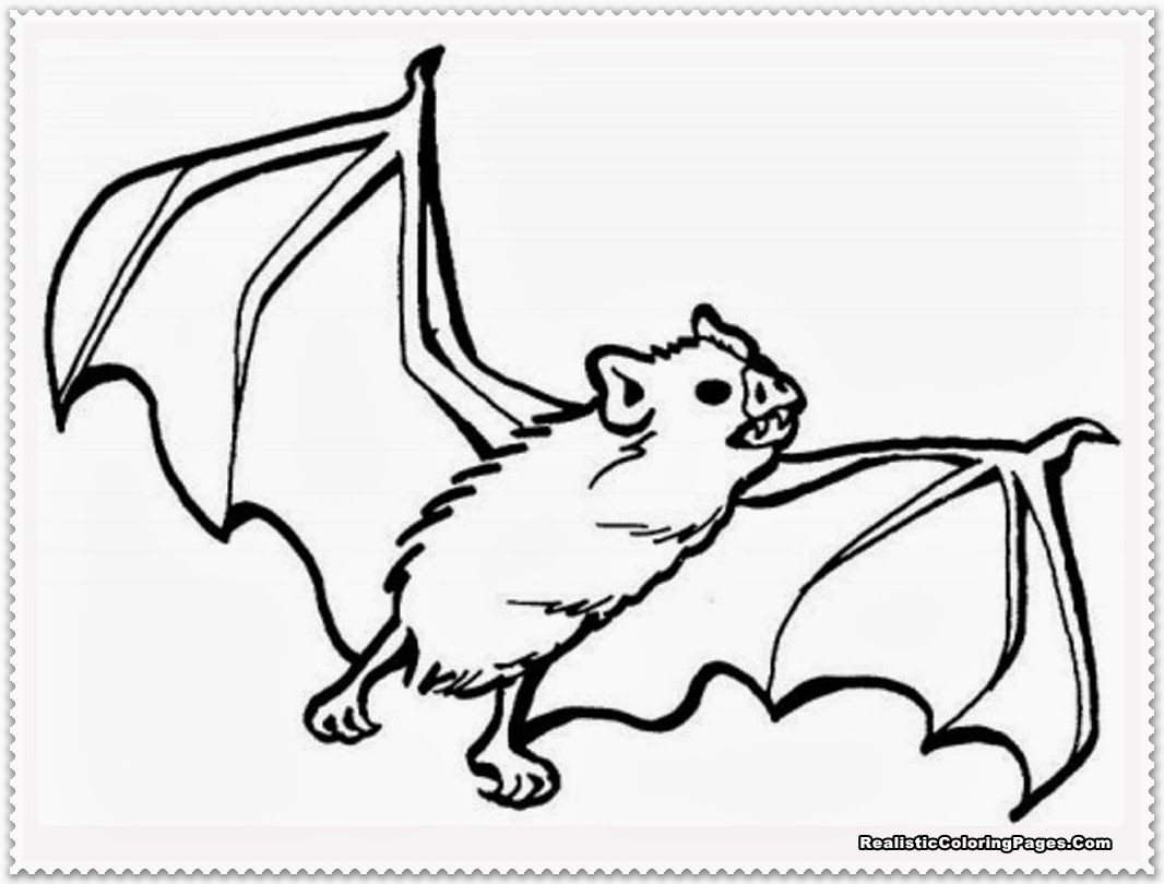 Coloring Pages Nocturnal Animals Coloring Pages pictures of nocturnal animals az coloring pages realistic bat 7 pics night animals