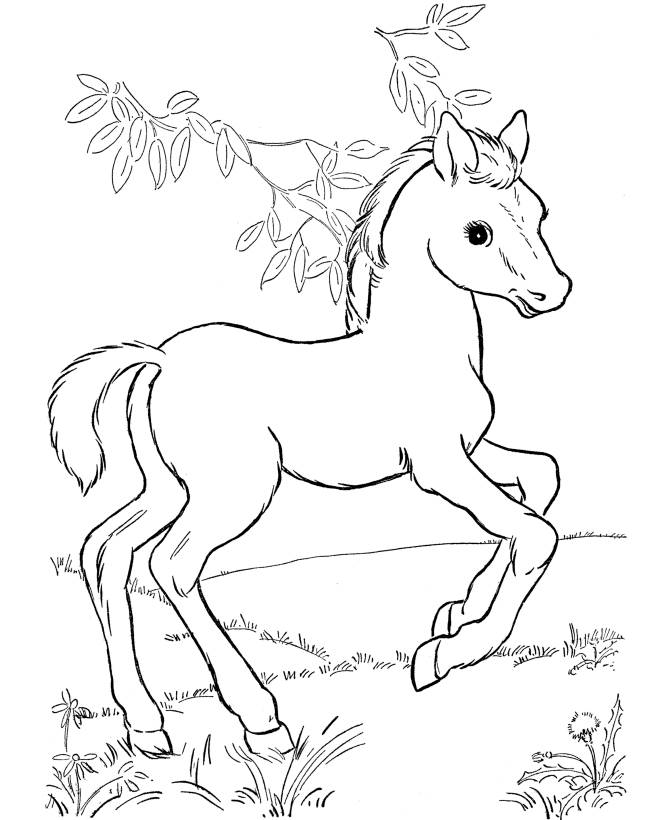 Free Printable Horse Coloring Pages Beautiful - Coloring pages