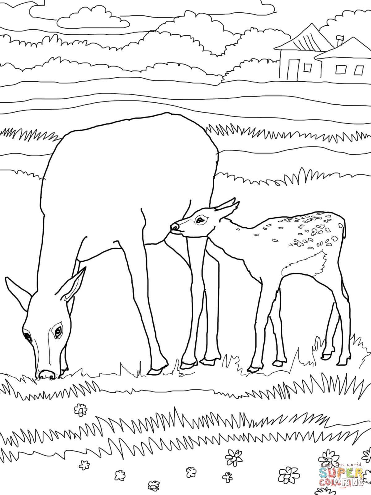 Free coloring pages elk - Elk Coloring Pages Elk Coloring Pages Bull Elk Coloring Pages