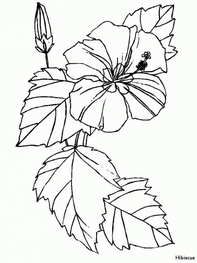 printable hawaiian flowers coloring pages - photo#11