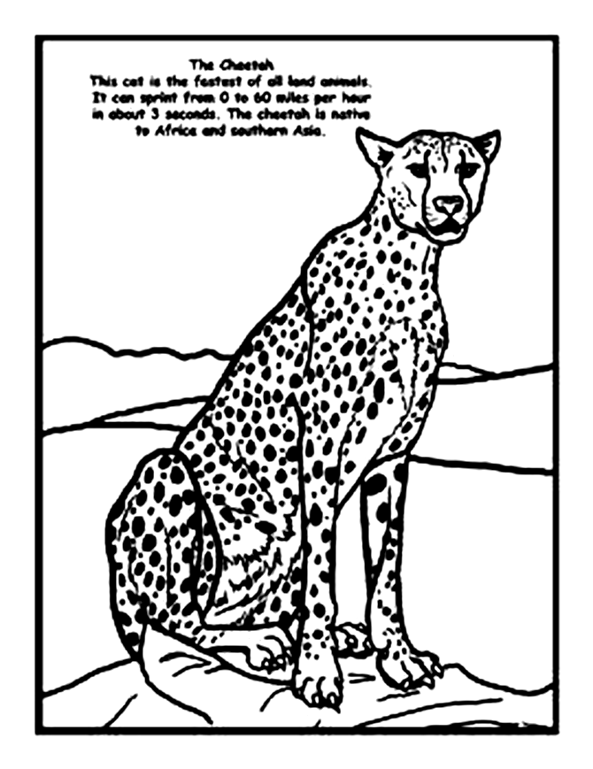 Cheetah Images Free Coloring Home