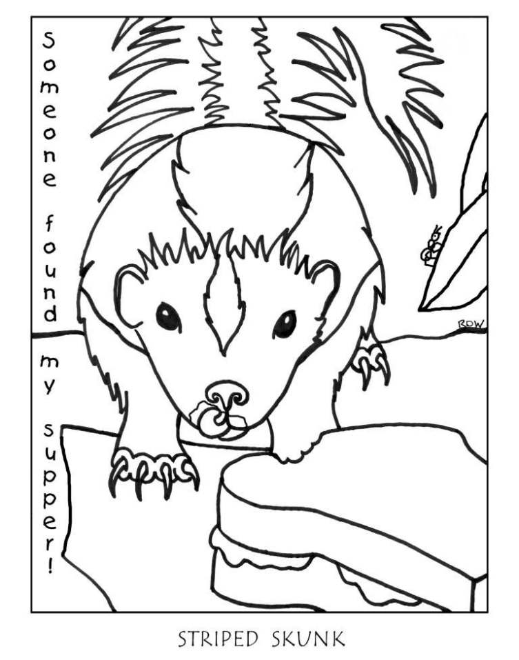 Skunk Images Free - Coloring Home