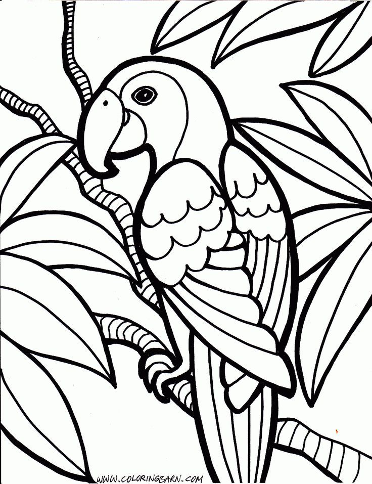 Parrot Coloring Sheet - Coloring Home