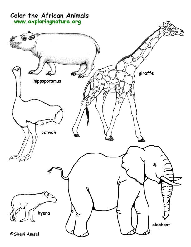 human animals Colouring Pages