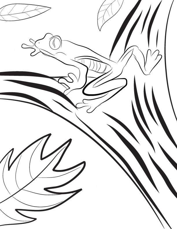 Tree frog coloring pages az coloring pages Coloring book amazon