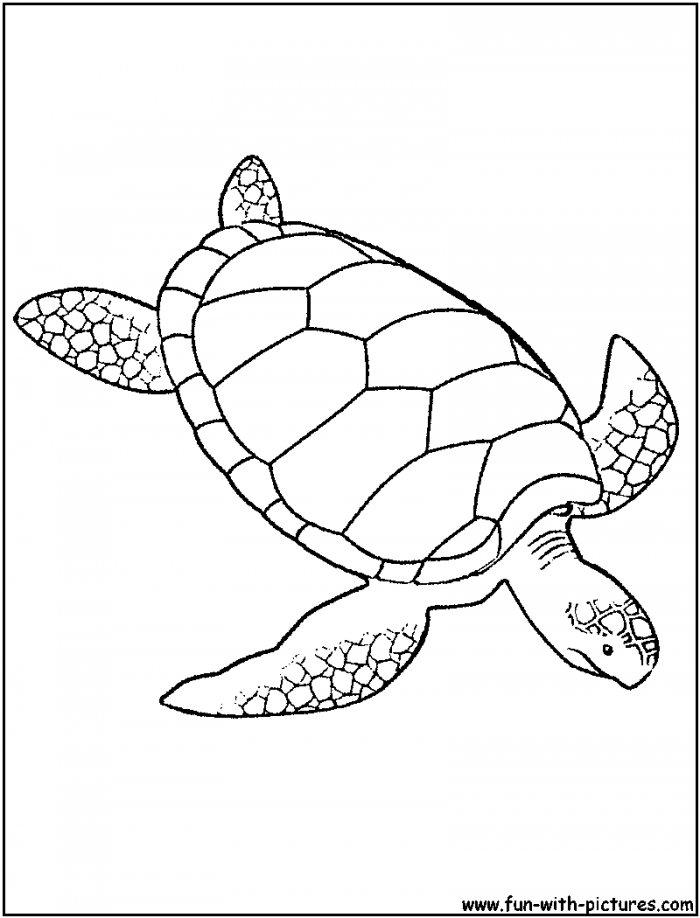 Sea World Coloring Pages Coloring Home