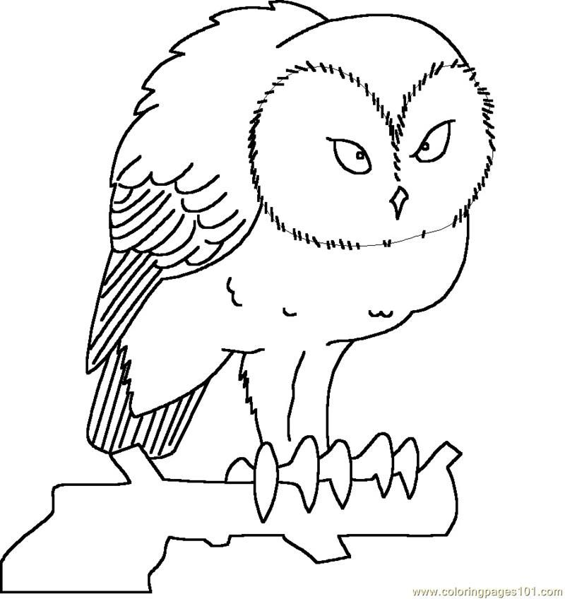 great horned owl coloring pages - photo#24