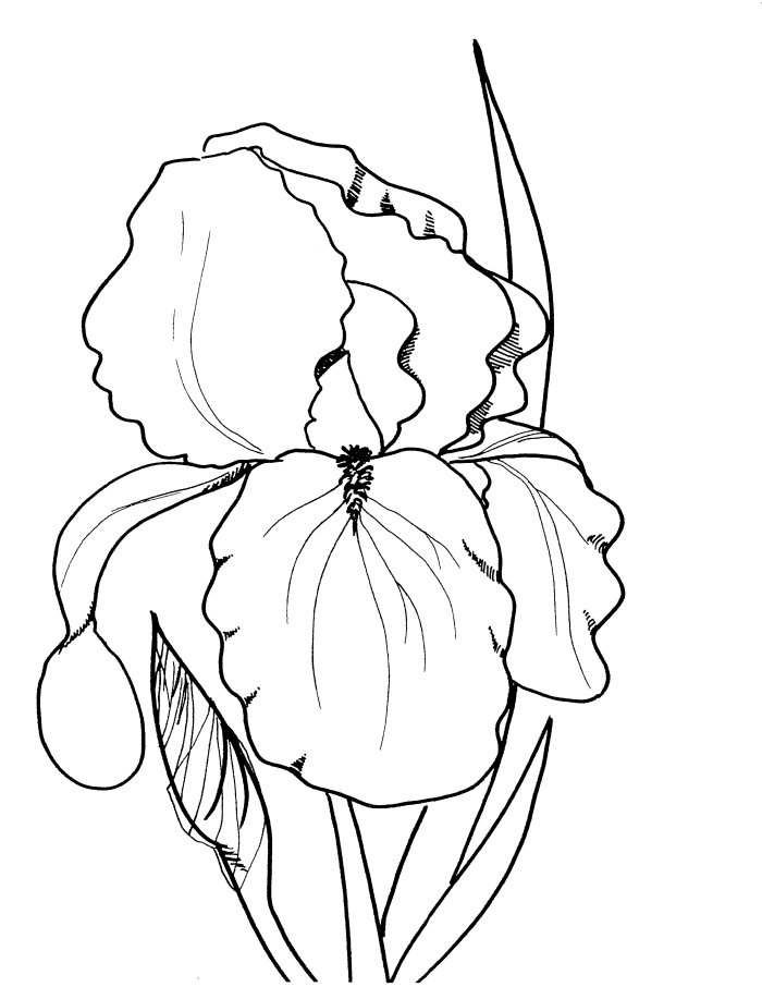 Realistic Flower Coloring Pages Az Coloring Pages Realistic Flower Coloring Pages