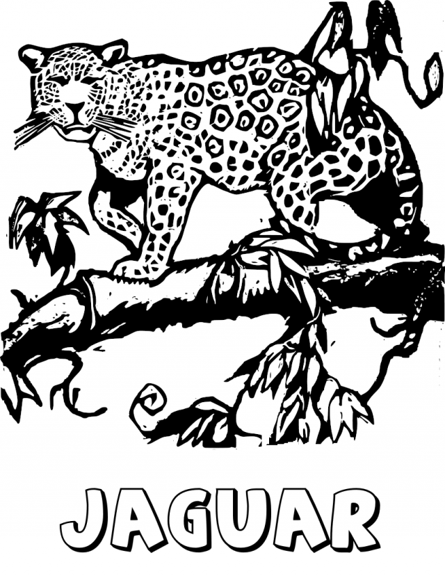 Jaguar On Tree Limb Coloring Page Http 32203 Wild Cats Coloring Pages