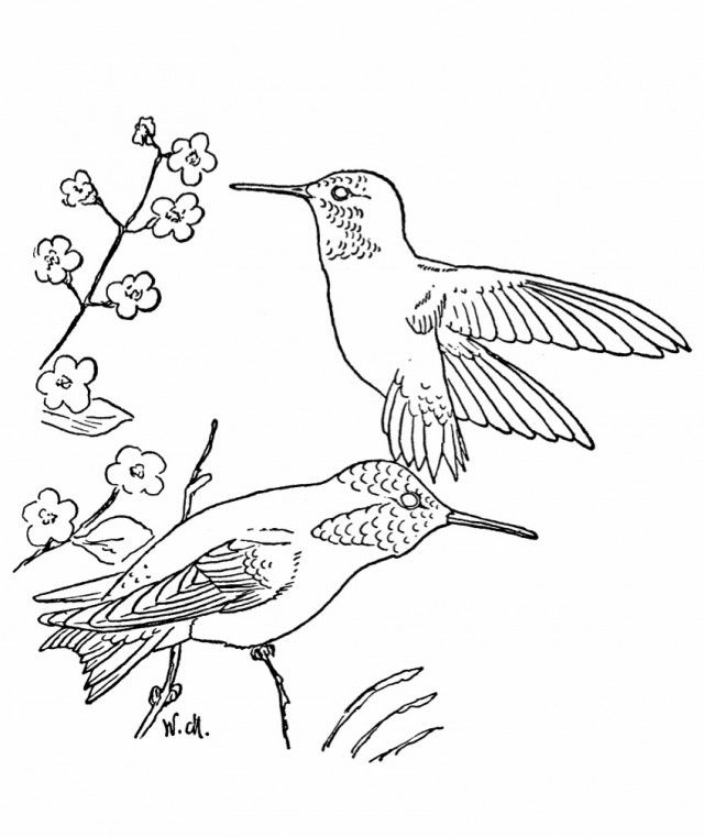Free hummingbird pictures coloring home for Coloring pages of hummingbirds