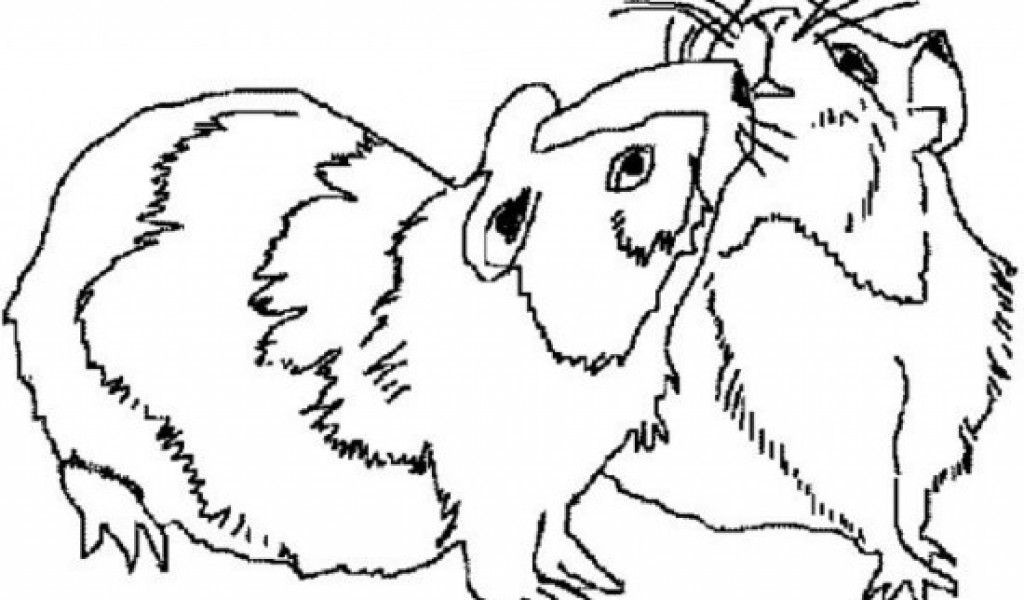 Guinea Pigs Coloring Pages